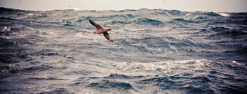 deep sea trawling stock photos