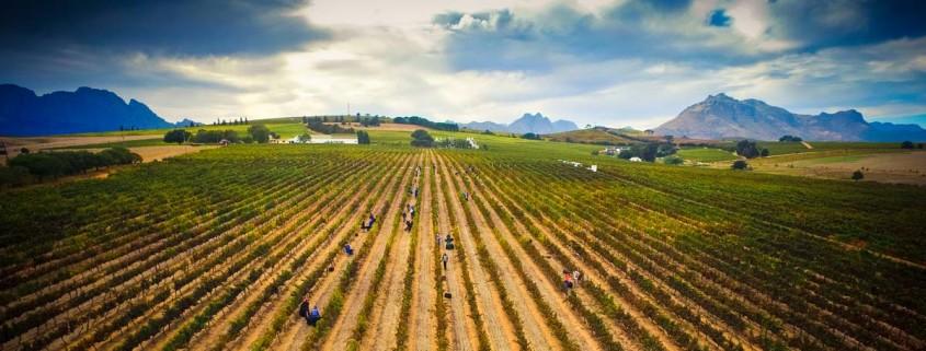 Simonsvlei wine farm
